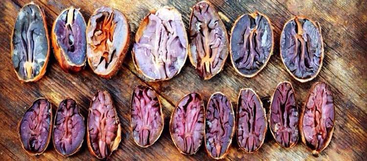 Fermentación de los granos de Cacao, un poco de magia (II)