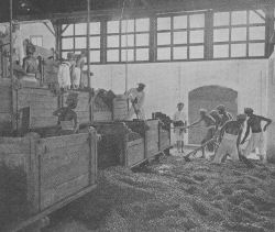 Fermentación del cacao a finales de 1900