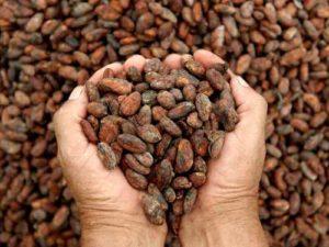 Tostador de cacao Atencion constante
